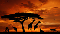 アフリカ投資を考える ー第7回アフリカ開発会議(TICAD7)を契機にー